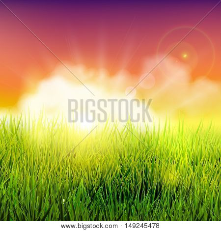 Beautiful summer field with long grass at sunset