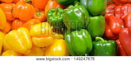 Fresh yellow, orange, green and red organic bell peppers capsicum on display for sale at local farmer's market departmental store.