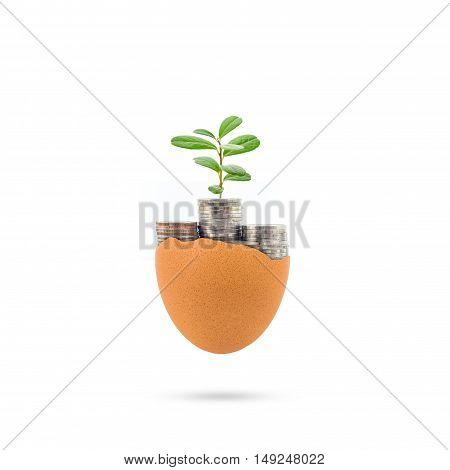 concept of new money growth a budding plant growing in coins on white background.