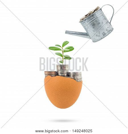 Plant growing on coins in egg broken concept for investment retirement on white background.