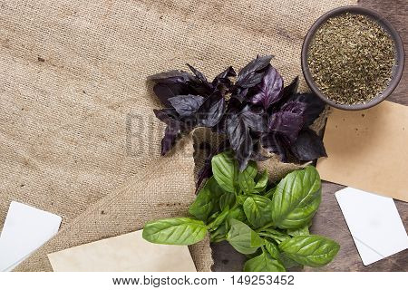 Basil fresh and dry on a background of burlap