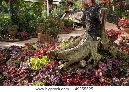 Old wooden decorated in flora garden ,Thailand.