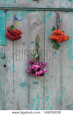 Bunches of Echinacea viburnum and rowan berries on wooden rustic background