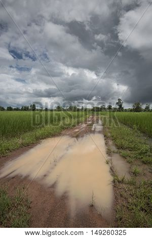 Rural Roads Flooding After Heavy Tropical Storms, Showing Orange Clay Soil Roads And Nearly Mature R