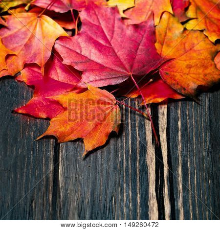 Autumn maple leaves on vintage dark wooden background with copyspace