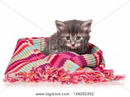 Cute little kitten wrapped up in a warm knitted scarf isolated over white background