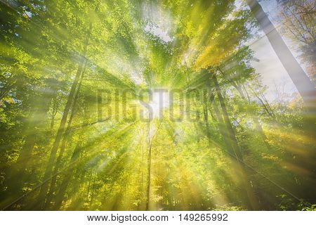 Sun rays shinning trough a lush forest foliage