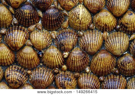 Close up of shells covering a wall in Spain