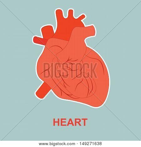 Internal human organ heart. Poster for medicine.