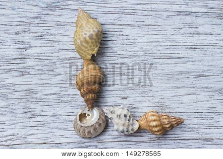 Letter L made of seashell on antique painted wood board