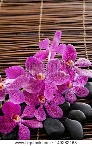 Pink, orchid with pile of stones on mat