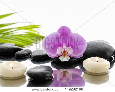 pink orchid and black stones with green leaf