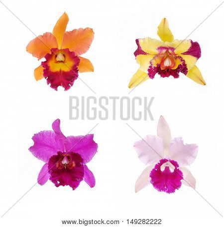 four colorful Orchids-white background
