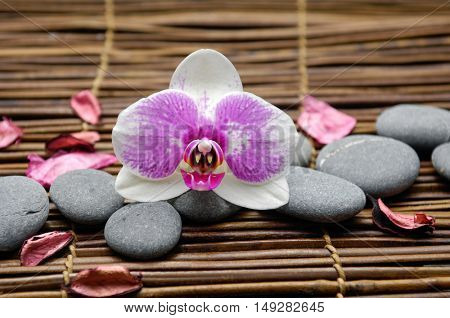 White orchid with gray stones with petals on mat,