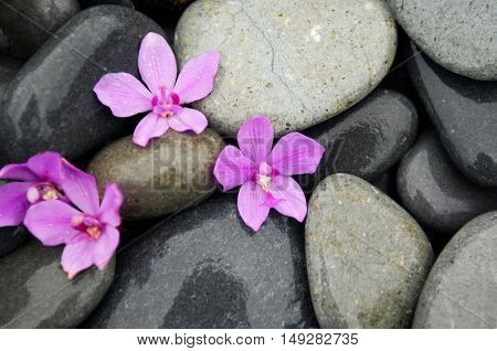 Pink orchid and beach stones texture