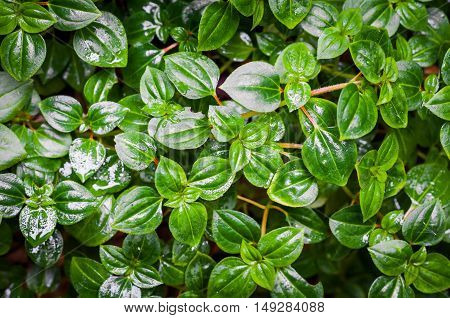 Green plant. Low key lighting leaves background, Nature green leaves.