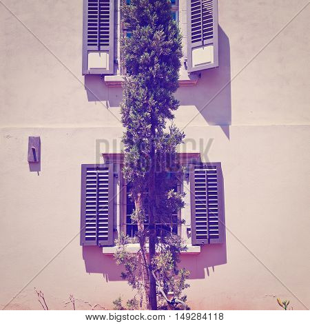 Cypress on the Backgraund of the Old Building in Tel Aviv Israel Instagram Effect