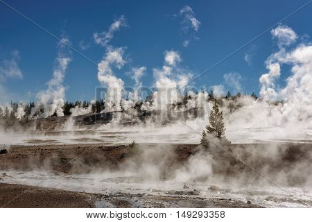 Geysers in Norris Basin at Sunny day, Yellowstone National Park, WY