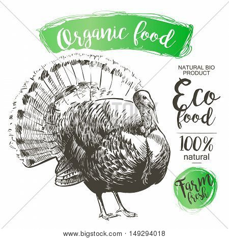 Turkey isolated - Vector engraved illustration in vintage style