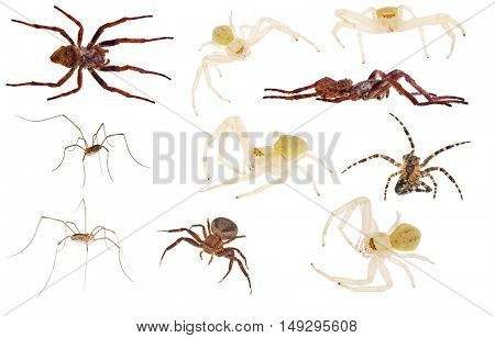 set of ten spiders isolated on white background