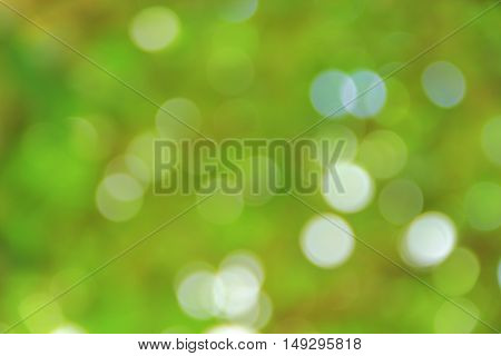 Bokeh natural color background, colorful  leaf of the tree fresh green, abstract blurred foliage and bright summer sunlight with copy space