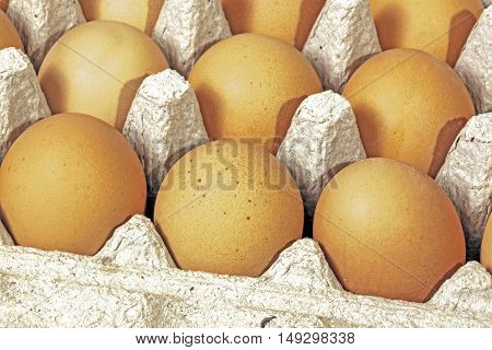Extreme close up studio shot of details of packaged chicken eggs textures and patterns