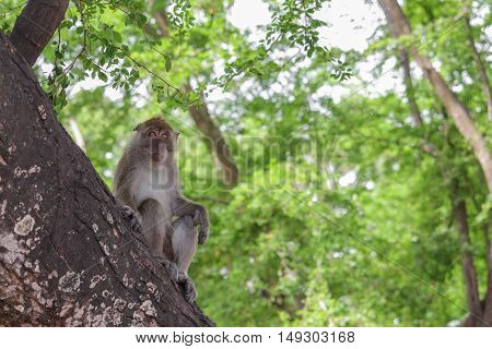 monkey on tree selective focus in nature