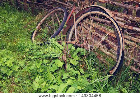 Old broken vintage rust bicycle lying in the grass