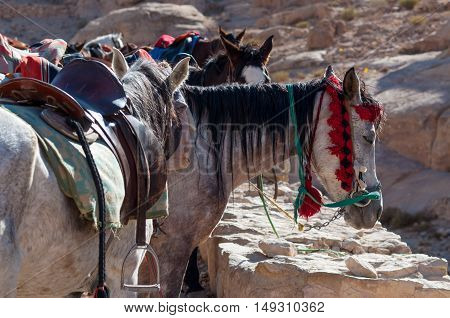 Group of horses near the entrance to Al Siq the canyon leading to Petra Jordan