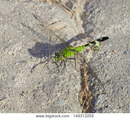 Green insect that has landed on some sand set bricks