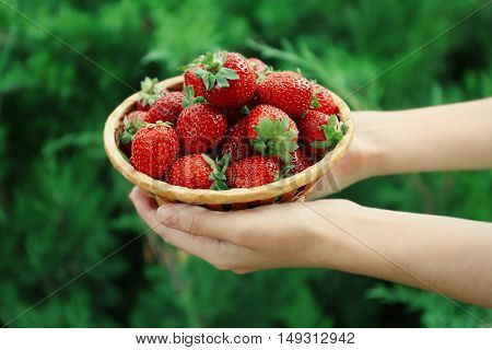 Female hands holding wicker basket with fresh strawberries on green blurred background