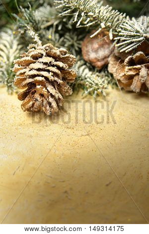 Spruce twigs on the background of gray paper