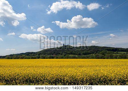 Landscape with castle Trosky and oilseed rape fields