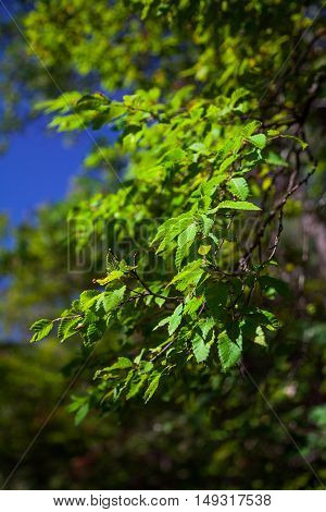 Green leaves in the sun in the park