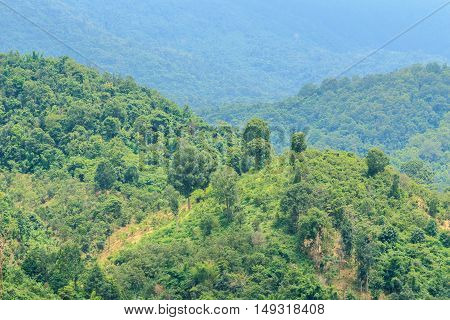 Area hills green forests with nature landscape background