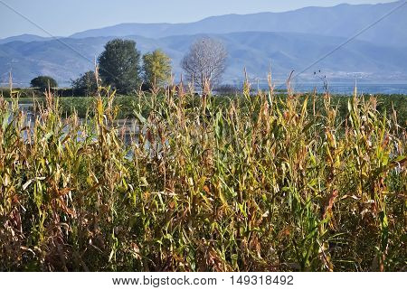 Generic vegetation and reed beside the marsh
