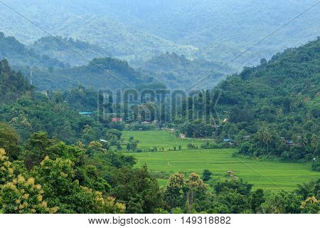 Area hills green forests with nature landscape and fields