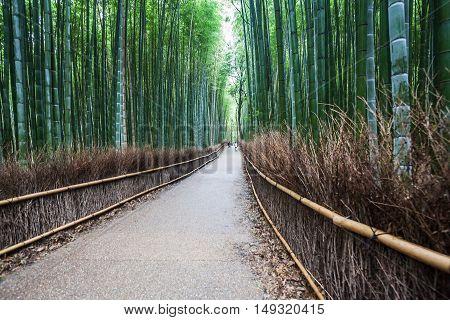 Holiday in Japan - Summer Autumn Transit in Arasiyama Sagano Bamboo, Kyoto