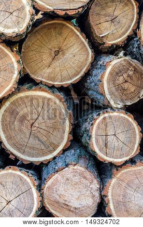 Stacked tree trunks in cross-section close-up Timber industry