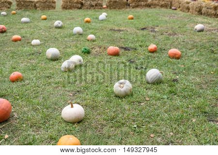Pile of colored pumpkins and gourds in Moldova, green grass and hay