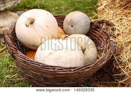 Pile of colored pumpkins and gourds in Moldova, wooden basket and hay