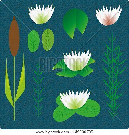 Lake plants set vector illustration cartoon background
