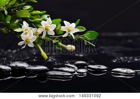 Still life with gardenia with therapy stones