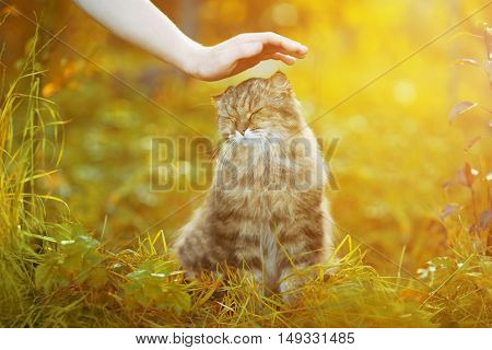 Ð¡at and hand on nature background. Allergies to animals, cat fur. Caring for Pets and stray animals