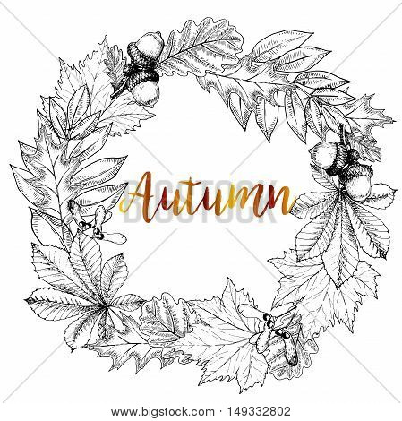Vector hand drawn wreath of autumn leaves. Oak maple chestnut acorn seeds. Vintage engraved style. Use for Greeting card discount template store shoping design