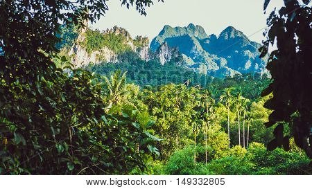 Hill Covered by Jungle in Khao Sok, Suratani, Thailand.