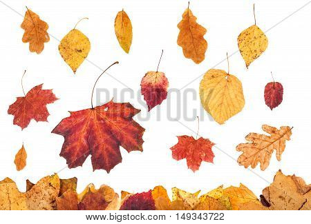 Various Autumn Leaves Falling On Leaf Litter