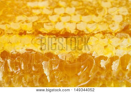 broken fresh honeycomb with honey close up