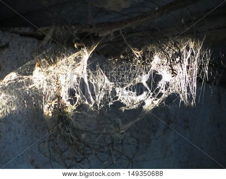 Cobweb or spider web illuminated by the sunshine in ancient house