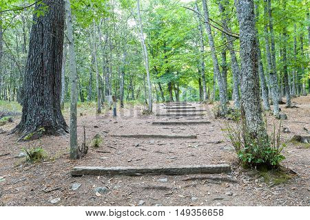 woods full of chestnut trees in summer